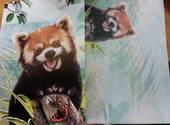 Red Panda Card and Envelope