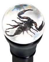 Scorpion Gear Knob