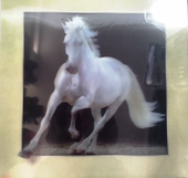 White Horse 5D Picture