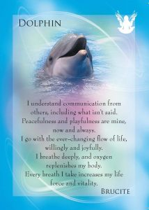 Dolphin Side-of-Card-214x300
